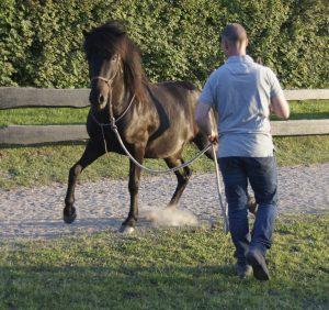Jonas træner hest fra jorden