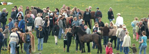 """Hingsteshowet på Hedeland plejer at være et """"avlermøde"""". Foto: KB"""