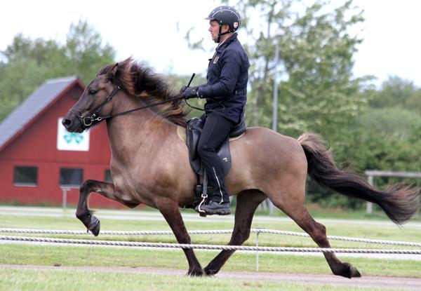 Árdis fra Guldbæk - kåringens suverænt højst bedømte hest. Foto: KB